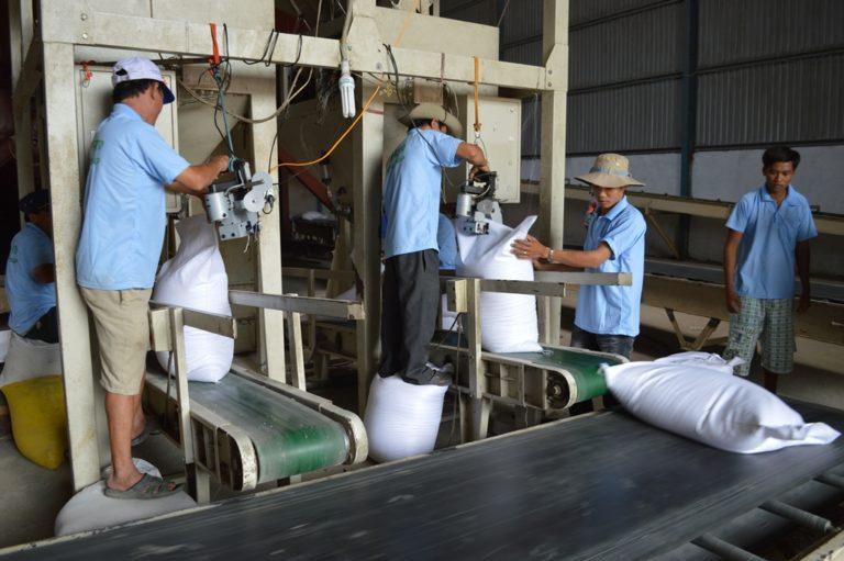vai trò của băng tải trong sản xuất