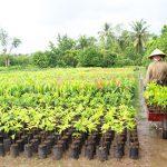 Máy nghiền đất tại Đà Nẵng